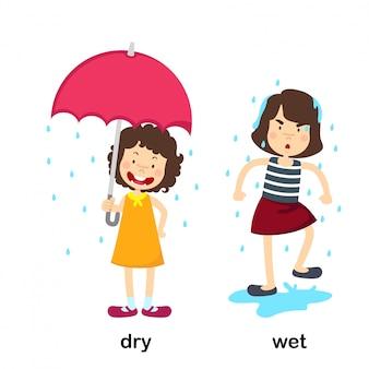 Opposite dry and wet vector illustration
