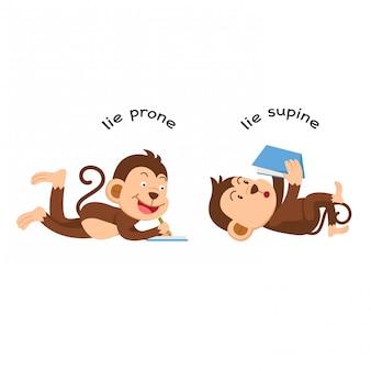 Opposite lie prone and lie supine vector illustration