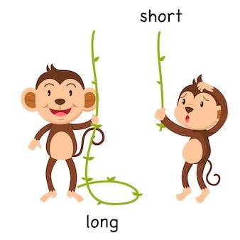 Противоположные длинные и короткие иллюстрации