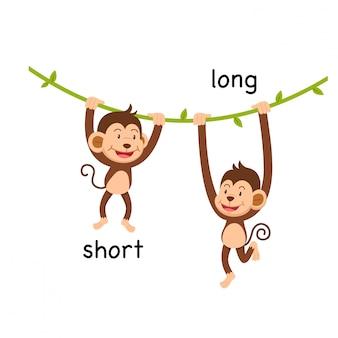 Opposite short and long  illustration