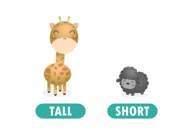 Opposite tall and short