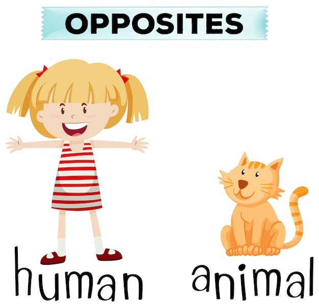 Opposite wordcard for human and animal