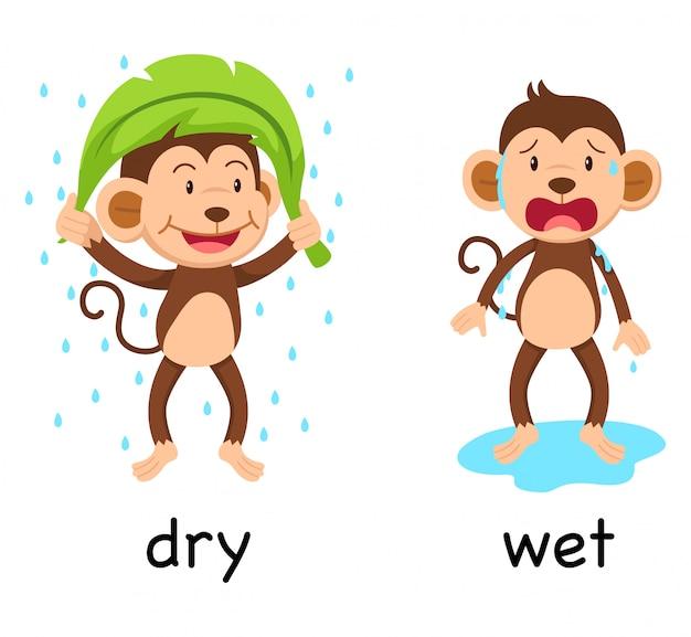 Противоположные слова сухие и мокрые