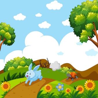 토끼와 거북이가 달리면서 빠르고 느린 단어 반대 프리미엄 벡터