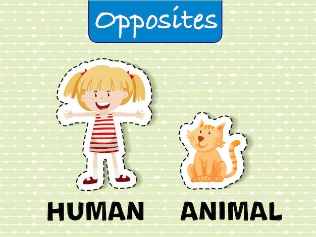 Противоположные слова для человека и животных