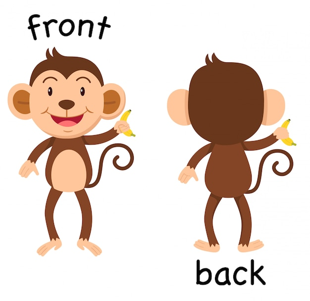 Opposite words front and back vector
