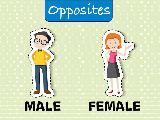 Opposite words for male and female