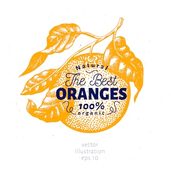 Orange branch illustration. hand drawn vector fruit illustration. engraved style. retro citrus illustration.