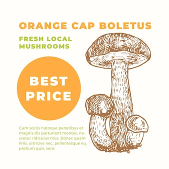 Orange cap boletus advertisment template. hand drawn mushrooms