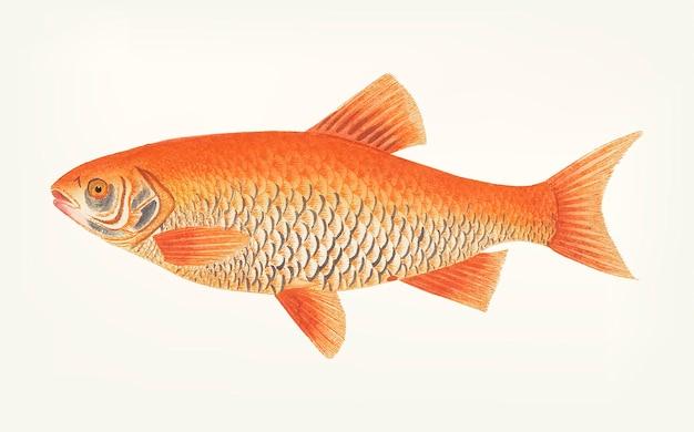 Ручная работа orange carp