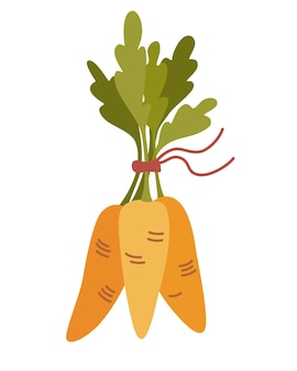 무리에서 오렌지 당근입니다. 신선한 만화 야채입니다. 무성한 꼭대기가있는 당근.