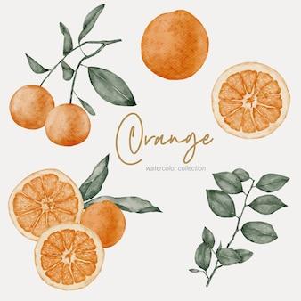 オレンジ元素の水彩画集