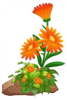 Fiori d'arancio su bianco