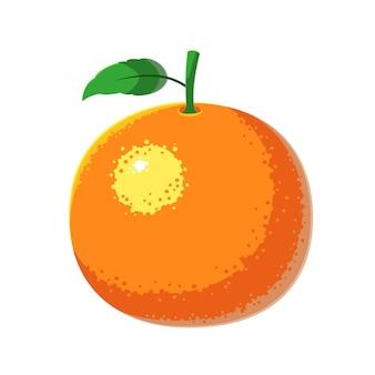 Orange fruit vector