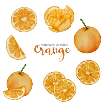 Arancia nella raccolta di acquerelli di frutta, piena di frutta e affetta e tagliata a metà