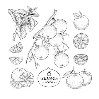 Orange fruits drawings.