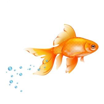 Orange goldfish with air bubbles.