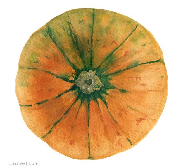 오렌지 그린 카니발 스쿼시, 식물 현실적인 watrecolor 예술, 추적 된 그림