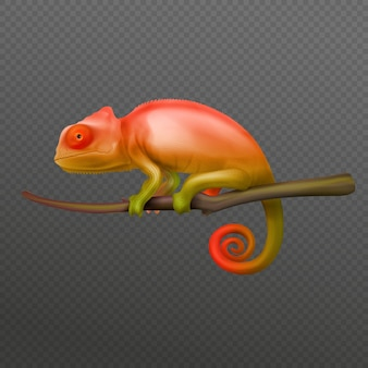 Orange green chameleon lizard sitting on branch