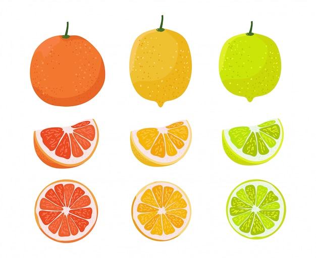 オレンジ、レモン、ライムのイラスト。柑橘類の家族のイラスト。