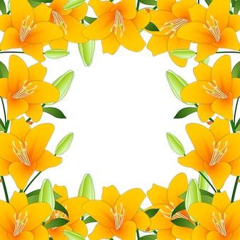 Оранжевая полоса лили на белом фоне