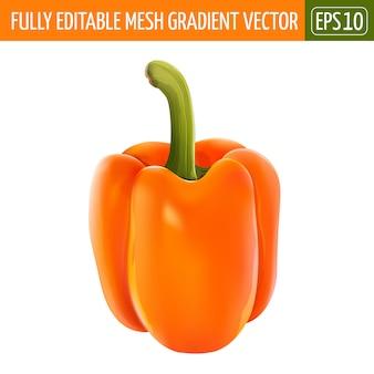 Orange pepper illustration on white