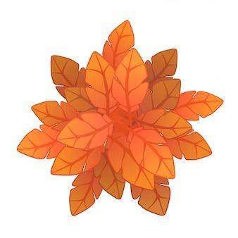 オレンジ色の植物または木、上面図。白のイラスト。