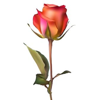 オレンジの赤いバラ。
