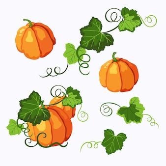 緑の葉と巻き毛の茎を持つオレンジ色の熟したカボチャ。ハロウィーン、感謝祭、秋のシンボル。