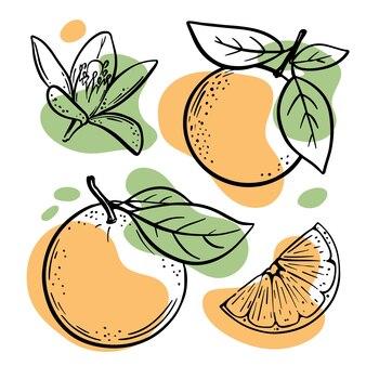 オレンジスケッチジューシーでおいしいトロピカルフルーツの柑橘類の花とスライス