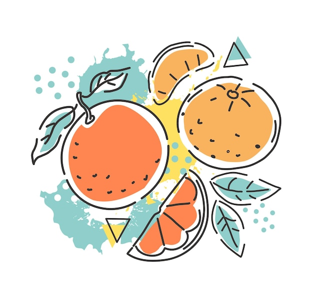 Orange and tangerine on an abstract background. packaging design. vector hand illustration.