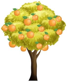 白で隔離されるオレンジの木