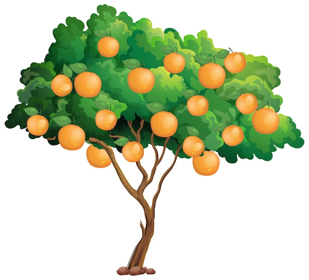 白で隔離されるオレンジの木 無料ベクター