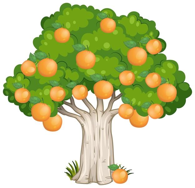 오렌지 나무 흰색 절연