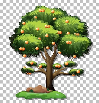 透明な背景にオレンジの木