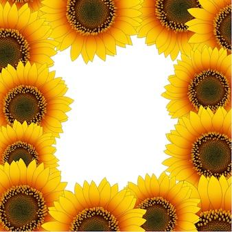 Orange yellow sunflower border isolated on white background