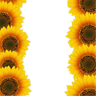 Orange yellow sunflower border