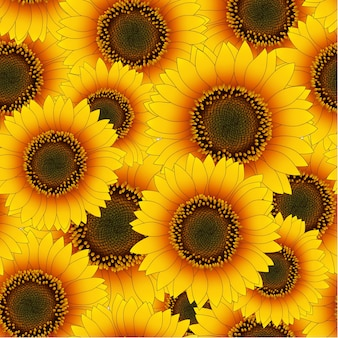 Orange yellow sunflower seamless background