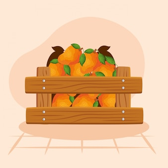 Oranges illustration, fruit healthy organic food sweet and nature