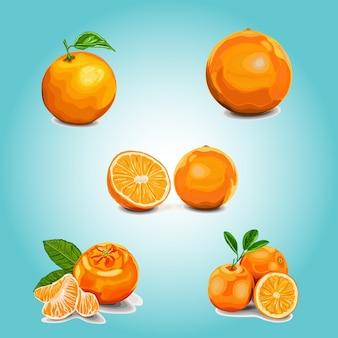 Апельсины на цветном фоне. иллюстрация, набор апельсинов