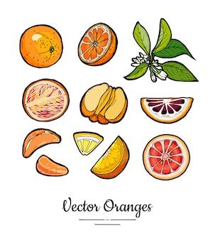 Апельсины набор векторных изолированы. целый, нарезанный апельсин, дольки, листья цветов.