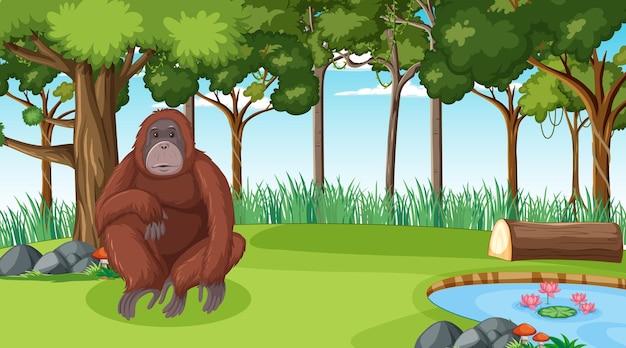 Орангутанг в лесу или сцена тропического леса с множеством деревьев