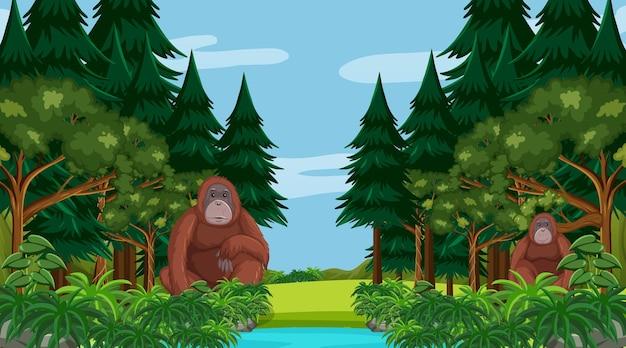 많은 나무가 있는 숲이나 열대우림 장면의 오랑우탄