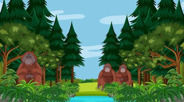 多くの木がある森や熱帯雨林のシーンでオランウータン