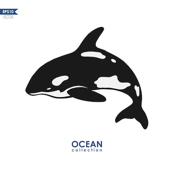 Orca whale isolated on white vector illustration of a whale