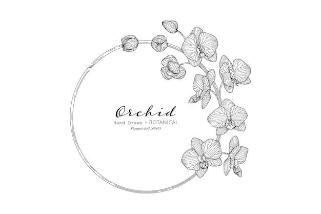 난초 꽃과 잎 손으로 그린 식물 삽화가 라인 아트로 그려져 있습니다.