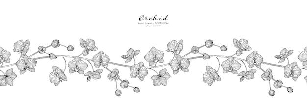 Цветок орхидеи и лист рисованной ботанические иллюстрации с линией искусства.
