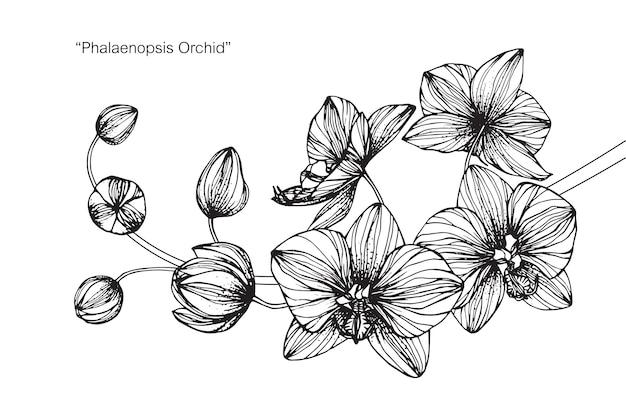 난초 꽃 그림 그리기