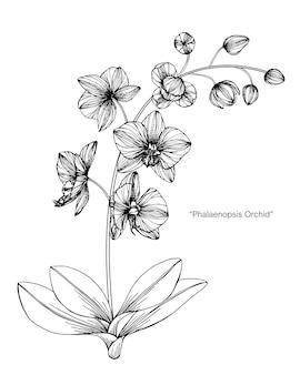 蘭の花を描くイラスト。