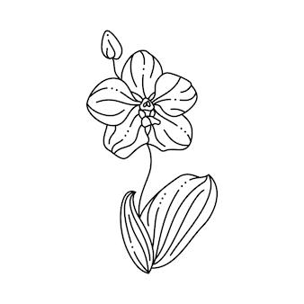 트렌디한 미니멀리스트 라이너 스타일의 난초 꽃 아이콘. 티셔츠, 웹 디자인, 미용실, 포스터에 인쇄하기 위한 벡터 꽃 그림, 로고 및 기타 만들기
